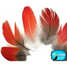 Solid Ivory Rooster Fluff Chickabou Feathers 1 Dozen