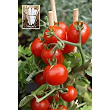 2 Free Plant Markers Dwarf Red Delicious Apple Seeds Apple Tree UPC 600188193572 50